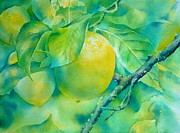 Frucht Posters - Sweet lemon Poster by Thomas Habermann