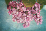 Lilacs Photos - Sweet Lilacs by Sylvia Cook