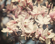 Lisa Russo Prints - Sweet Magnolia Print by Lisa Russo