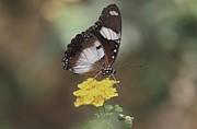 Ramabhadran Thirupattur - Sweet Nectar