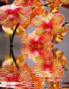 Judy Palkimas - Sweet Orchid Reflection