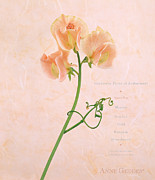 Fine Art Flower Photography Posters - Sweet Pea Poster by Anne Geddes