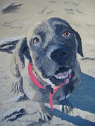 Mastiff Dog Paintings - Sweet Pea by Norm Starks