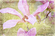Textured Floral Prints - Sweet Susan Print by Linda Lees