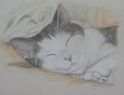 Pastel Paintings - Sweet While Sleeping by Cathy Lindsey