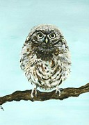 Owl Picture Framed Prints - Sweetest Baby Owl Framed Print by Leslie Allen