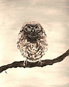 Owl Picture Prints - Sweetest Owl Print by Leslie Allen