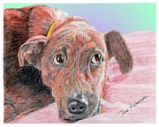 Brindle Drawings Posters - Sweetie - a former shelter star Poster by Dave Anderson