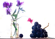 Purple Grapes Photos - Sweetpea And Grapes by Constance Fein Harding