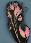 Tendrils Mixed Media - Sweetpea in the pink by Susan Leake