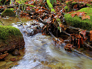 Water In Creek Prints - Swept Away Print by Sharon  Talson