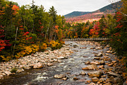 Fall Colors Posters - Swift River painted with autumns paint brush Poster by Jeff Folger