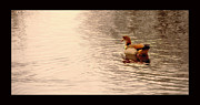 Duck Pyrography - Swiming Alone by Anusha Hewage