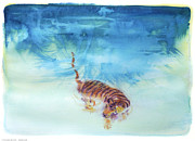Cat Utopia Prints - Swimming Tiger - 1 Print by Terry Burkes