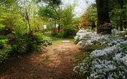 Flower Gardens Photos - Swing in the Garden by Sandy Keeton