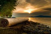 Bc Coast Photos - Swirly Log by James Wheeler