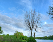 Nature Center Pond Prints - Swirly Sky and Tree Print by Deborah Smolinske