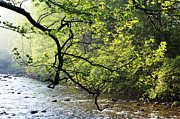 Williams River Scenic Backway Prints - Sycamore Branch and Williams River Print by Thomas R Fletcher