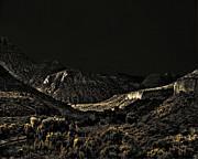 Arne Hansen - Sycamore Canyon I