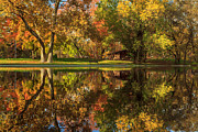 Sycamore Reflections Print by James Eddy