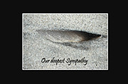 Randi Grace Nilsberg - Sympathy Feather
