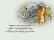 Mother Nature Photos - Sympathy Greeting Card - Poem and Milkweed Pods by Mother Nature