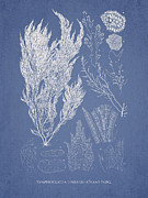 Symphocladia Linearis Print by Aged Pixel