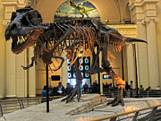 Gregory Dyer - T-Rex Sue at Chicago Field Museum
