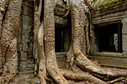Cambodia Photos - Ta Prohm 2 by Bob Christopher