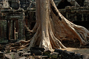Ta Prohm Cambodia Print by Bob Christopher