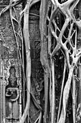 Strangler Fig Metal Prints - Ta Prohm Roots And Stone 09 Metal Print by Rick Piper Photography