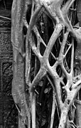Strangler Fig Metal Prints - Ta Prohm Roots And Stone 10 Metal Print by Rick Piper Photography