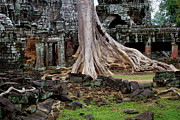 Khmer Framed Prints - Ta Prohm Temple Ruins Framed Print by Artur Bogacki