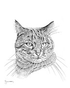 Kitten Prints Drawings Prints - Tabby Print by Carl Genovese