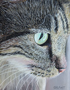 Greeting Card Pastels Originals - Tabby Cat by Joanne Grant