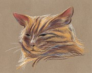 Cat Portraits Pastels Prints - Tabby Cat Portrait in Pastels Print by MM Anderson