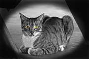 Cat Paw Posters - Tabby Cat Poster by Terri Mills