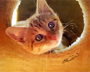 Kitten Prints Prints - Tabby in Red Print by Elia Peters