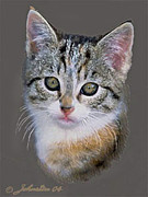 Paw Mixed Media Posters - Tabby  Kitten Poster by Nadine and Bob Johnston