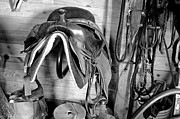 Thoroughbred Gelding Prints - Tack Room BW Print by J M L Patty