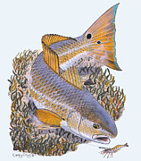 Robalo Posters - Tailing Redfish Poster by Carey Chen