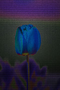 Digitally Altered Floral Posters - Tainted Tulip Poster by Laura Bentley