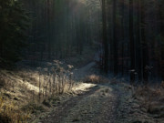 Evening Light Prints - Take a morning walk in winter Print by Heiko Koehrer-Wagner