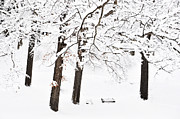 Winter Scenes Photos - Take a Snowy Seat by Emily Stauring