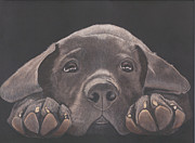 Chocolate Lab Drawings - Take Me Home - Chocolate Lab Puppy by Joelle