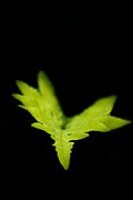Fern Photos - Take My Hand by Shane Holsclaw