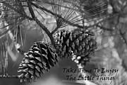 Take Time Prints - Take Time To Enjoy The Little Things Print by Kathy Clark