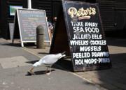 James Brunker - Takeaway Seafood 1