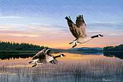 Geese Drawings Metal Prints - Taking Flight Metal Print by Brent Ander