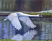 Swan In Flight Prints - Taking Flight Print by Lamarr Kramer